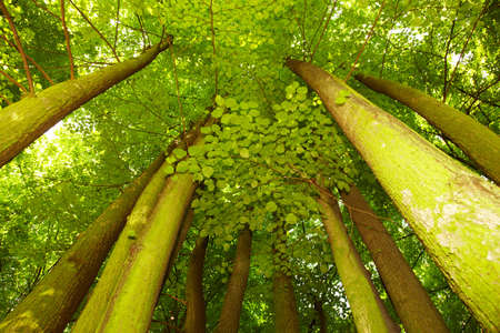 Under greenery - the beech canopy Stock Photo - 17084224
