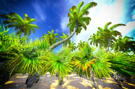 Hawaiian paradise photo