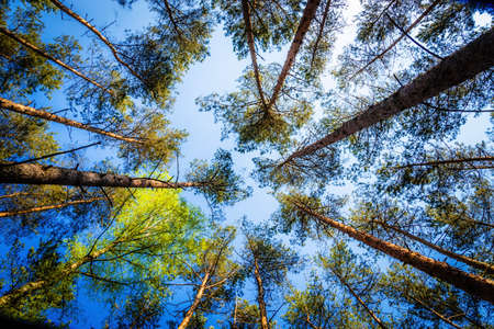 tallness: Awesome beech forest
