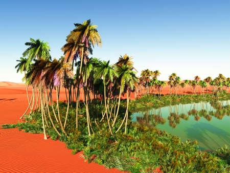 oasis photo
