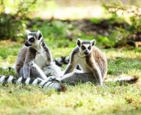 kata: Cute lemur kata