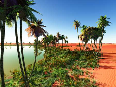 plantas del desierto: África oasis Foto de archivo