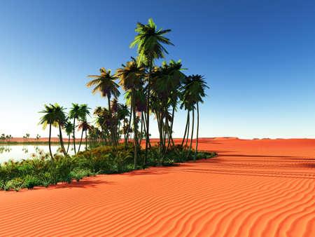 plantas del desierto: ?frica oasis