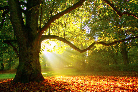 Mighty oak tree 版權商用圖片 - 32924223