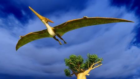 Flying pterodactyl Reklamní fotografie
