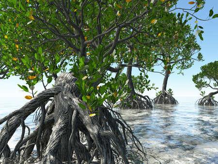 플로리다 해안에 빨간색 맹그로브 3 차원 렌더링