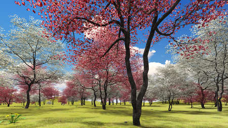 Flowering dogwood trees in orchard in spring time 3d rendering Reklamní fotografie - 91016459