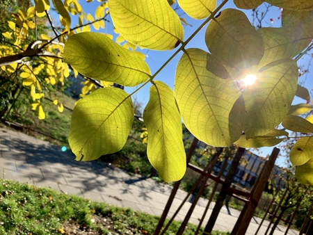 Splendid autumn light in park