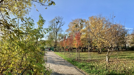 Splendid autumn light in park