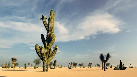 Sunset in the Desert with Cacti Reklamní fotografie