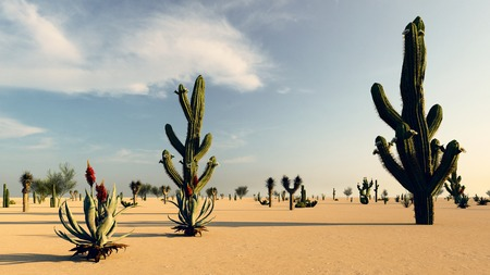 Sunset in the Desert with Cacti Stock Photo