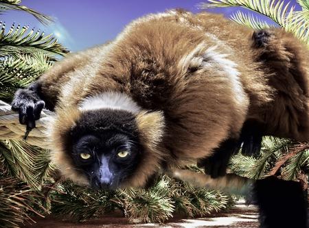 Cute lemur playing on rope