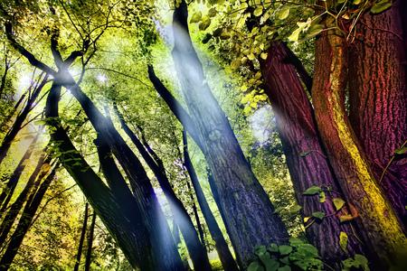 Shafts of lights piercing through dense canopy 版權商用圖片