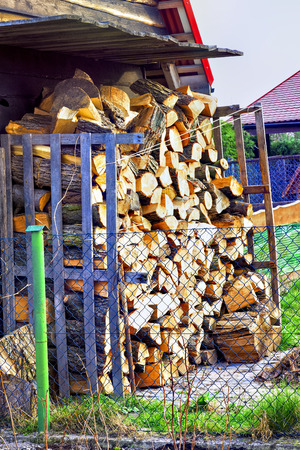 Stacked logs in the forest 版權商用圖片