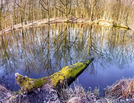 Mystic foggy swamp with dead tree 版權商用圖片