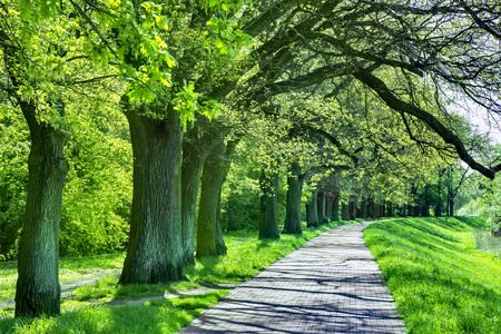 Beautiful beech canopy country road 版權商用圖片