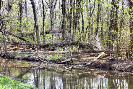 swamp scene in South West Poland