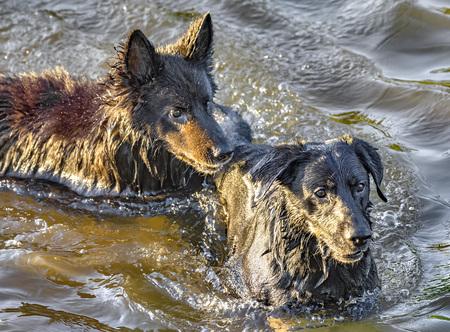 Dog having fun in a river