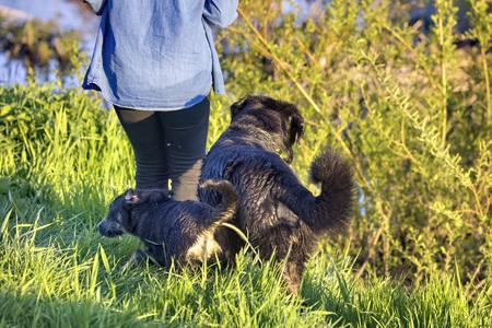 Woman with her three dogs 版權商用圖片