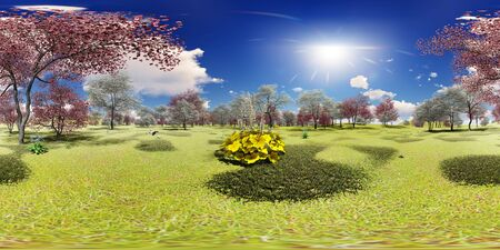 Flowering dogwood trees in orchard in spring time in 360 panorama Stock Photo