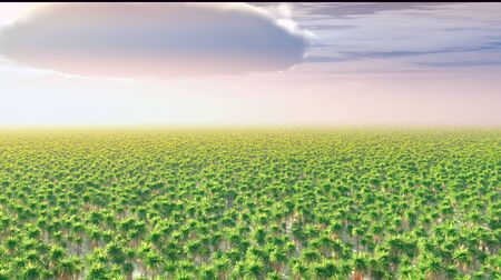 Date palm trees plantation 3d rendering Reklamní fotografie