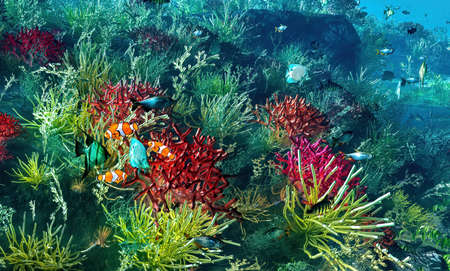 Underwater paradise with colorful fish