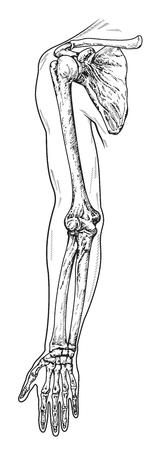 arm scheme vector illustration 向量圖像