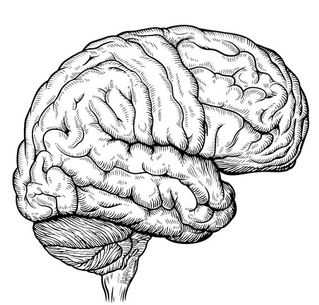 Engraving brain illustration in gray scale monochrome color on white background 向量圖像