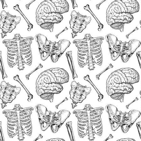 human bones pattern