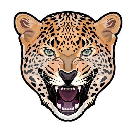 Jaguar head symmetrical colored isolated vector illustration