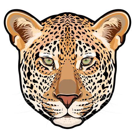 Leopard head in vector, Panthera pardus, big cat, wild animal