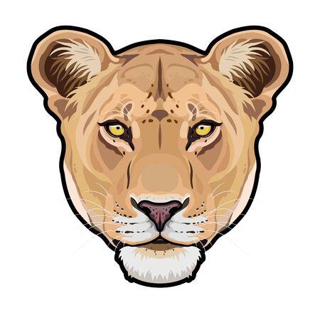 Lioness animal cute face. Vector African wild lion cat head portrait. Realistic fur portrait of lioness