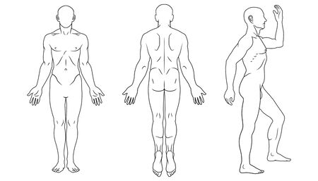 Human body front, back and side views Vetores