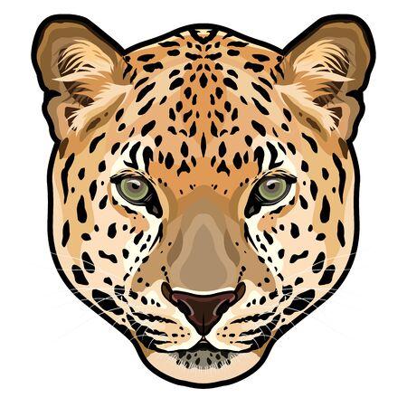 Leopard head, Panthera pardus, big cat, wild animal vector illustration