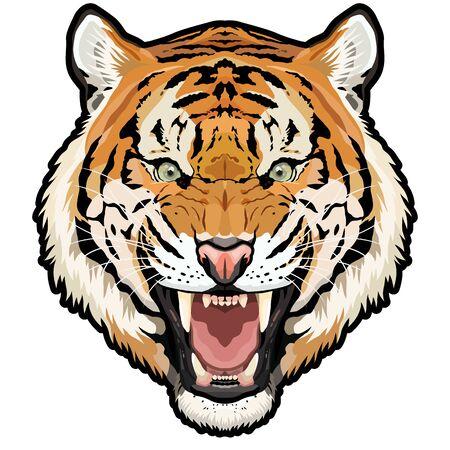 Roaring tiger head colored vector animal illustration