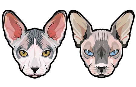 Fashion vector portraits of Elegant Sphynx cat heads isolated