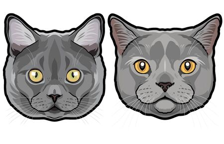 Realistic fur portrait of cute British shorthair cats isolated