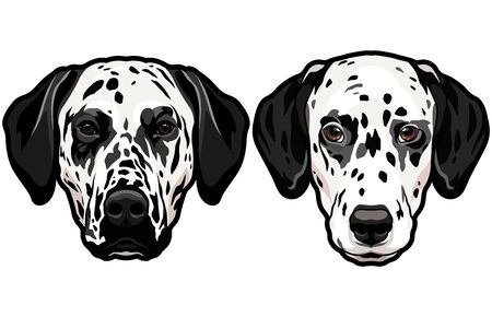 Set of two dalmatian spotted dog heads isolated
