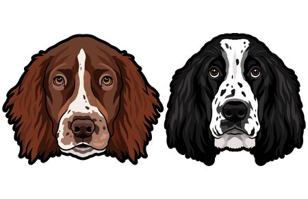 English cocker spaniel breed dog heads colored illustration