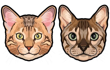 Set of two detailed colored house cat heads vector illustration isolated 向量圖像