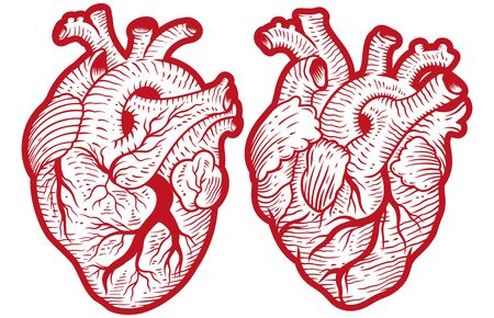 Vintage anatomical engraving style human hearts vector illustration Illustration