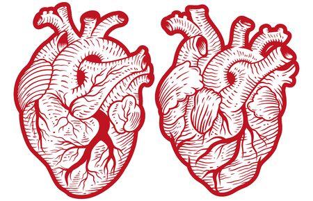 Vintage anatomical engraving style human hearts vector illustration 向量圖像