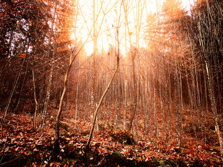 Ray lights into a fall colored forest