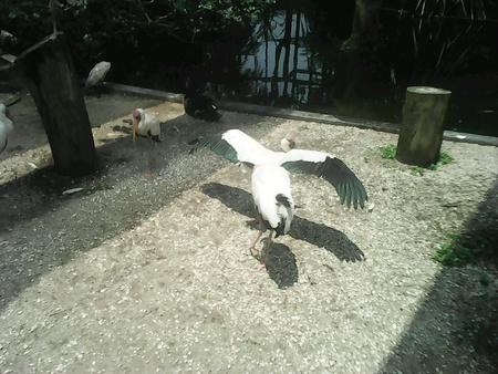 kl: Zoo Negara, KL Stock Photo
