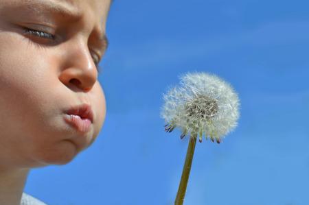 blowing dandelion: Boy blowing dandelion
