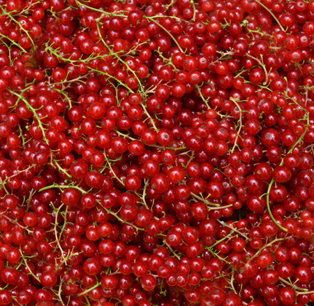 currants: Background from red currants