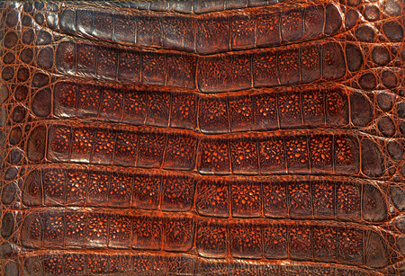 genuine leather: Crocodile genuine leather background Stock Photo