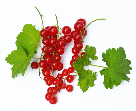 redcurrant: Redcurrant with leaves Stock Photo