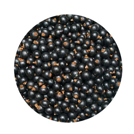 blackcurrant: Background from blackcurrant