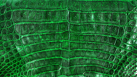 genuine: Crocodile genuine leather background Stock Photo